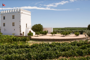 Vineyards and tower flag